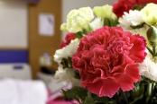 15-ways-to-share-a-smile #ctmh #closetomyheart #shareasmile #smile #share #operationsmile #punnypals #chrysanthemum #flowers #hospital